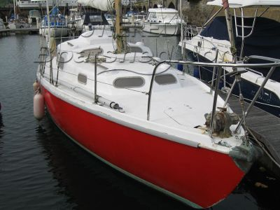Kingfisher 30