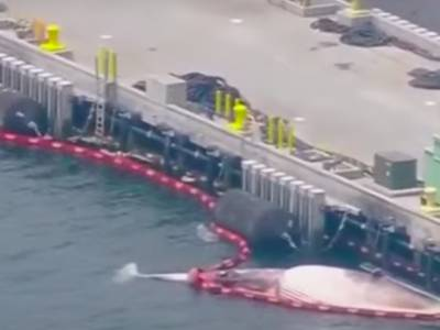Death of two whales leads to US Navy statement
