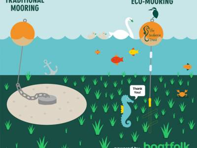 Marina group partners with The Seahorse Trust in conservation effort