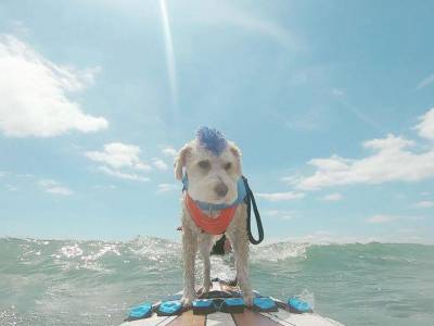 WATCH: Dog surfing & SUP championships in Poole this weekend
