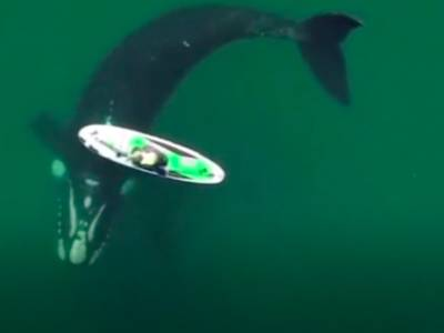 VIDEO: Stunning footage of whale encounter with SUP