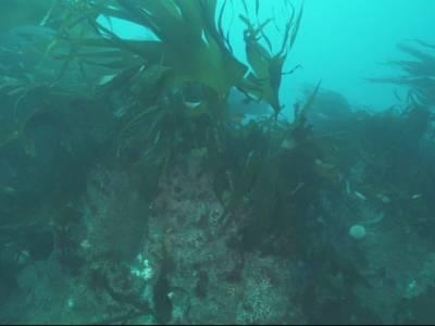 Calls for south coast to become Marine National Park