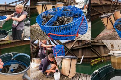 Is mussel poo the answer to microplastics?