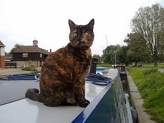Living Aboard - Part 9: Pets on Board