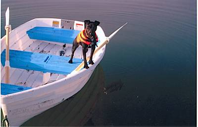 Boatshed Brokers - We Salute You