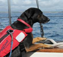 Cruising abroad with your Dog