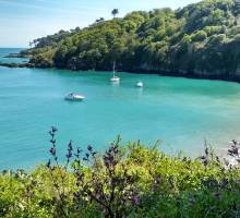BUSINESSES FOR SALE: Boatshed Chichester & Boatshed Guernsey