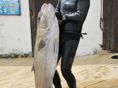 Go fishing in the Straits of Gibraltar near Tarifa, Spain